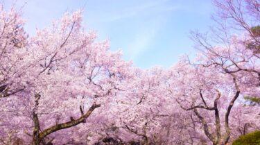 桜の森の満開の下には